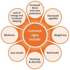 Kidney disease signs