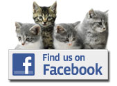 facebook-icon-kittens 3