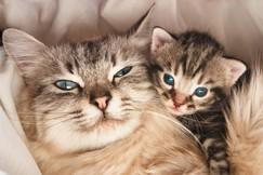 cats cuddling2